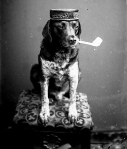 cropped-dog-with-pipe31.jpg